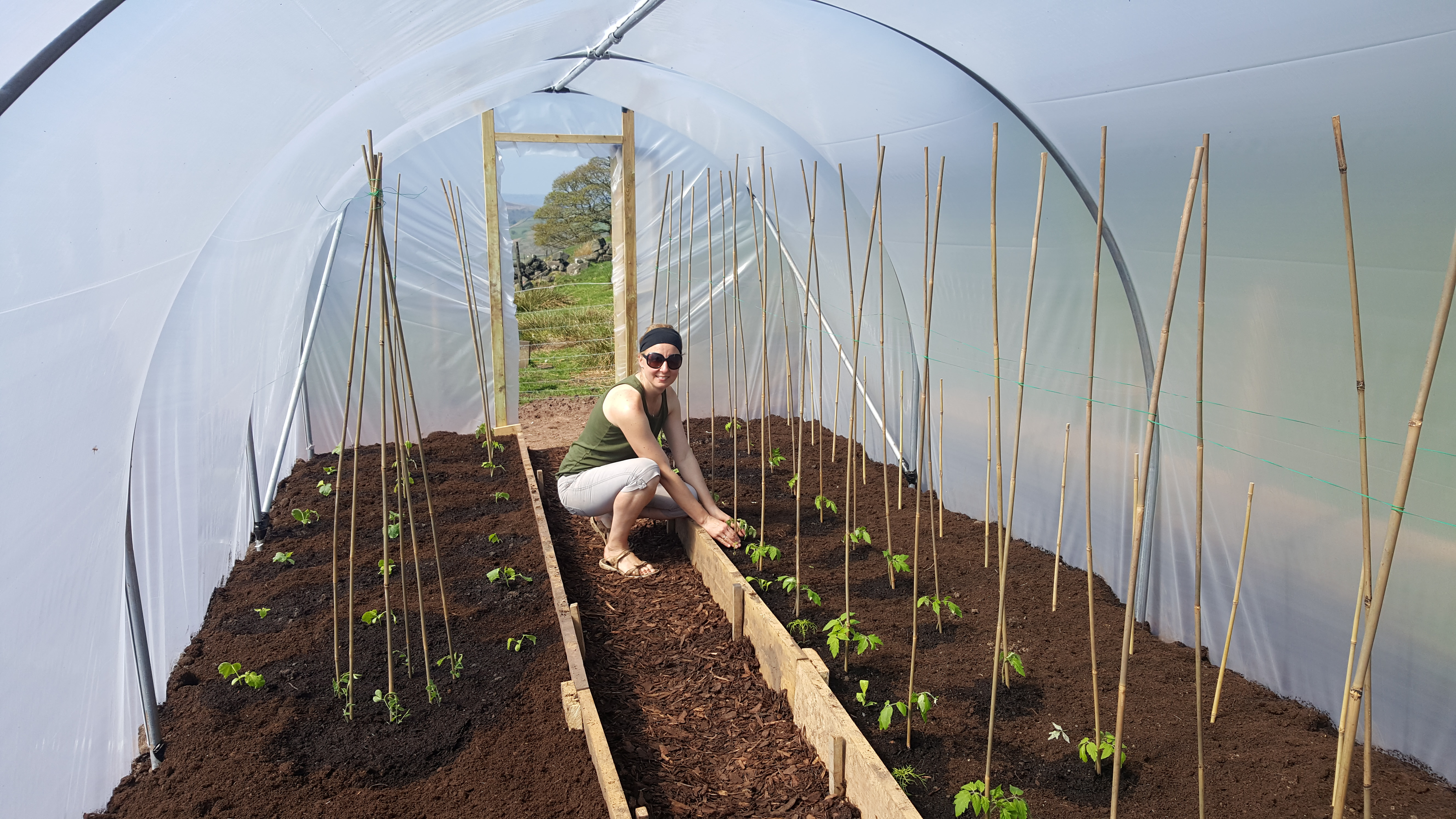May in a Polytunnel   Polytunnel Gardening